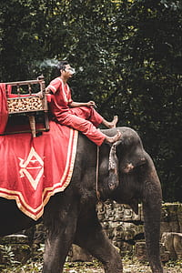 man riding elephant
