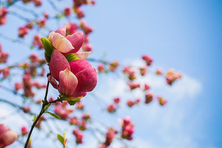 Spring Tree Blooms Detail
