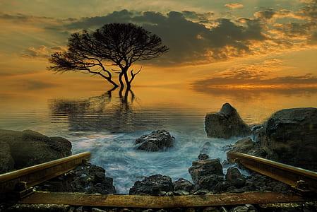 timelapse photography of splashing waves on rocks near tree during golden hour