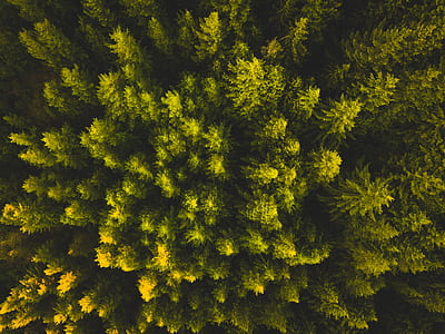 topview of forest