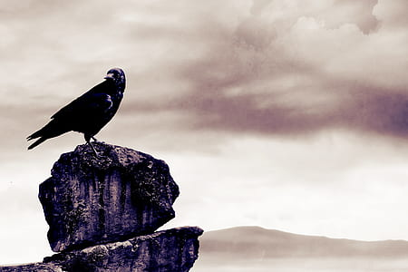 black bird on a cliff