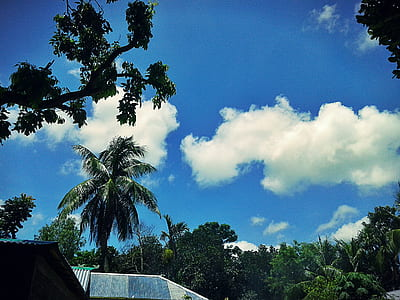 Photography of Trees Under Blue Cloudy Sky
