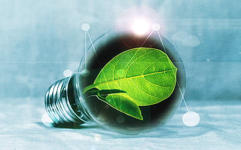 green leaf inside LED bulb graphics art