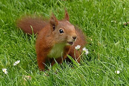 brown squirrel standing on grass