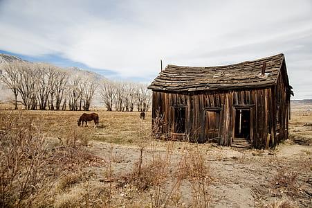 wooden house near the horsae