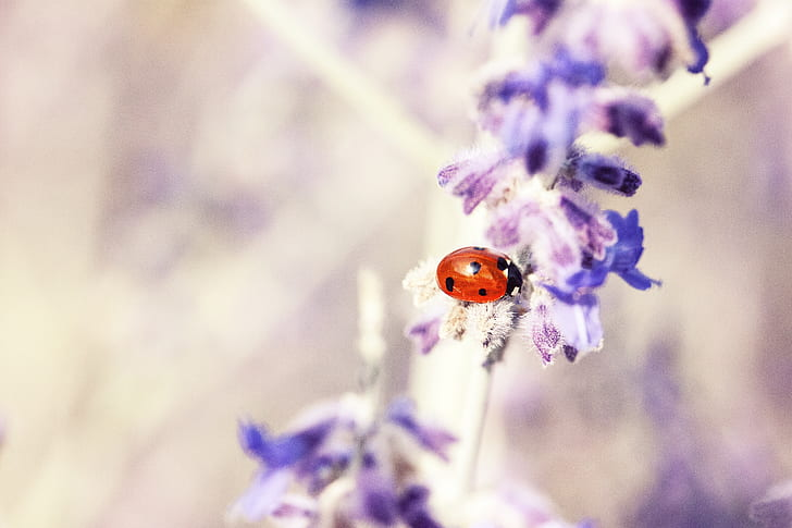 red ladybug on purple flower in selective focus photography