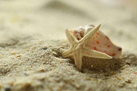 brown starfish on brown sandals