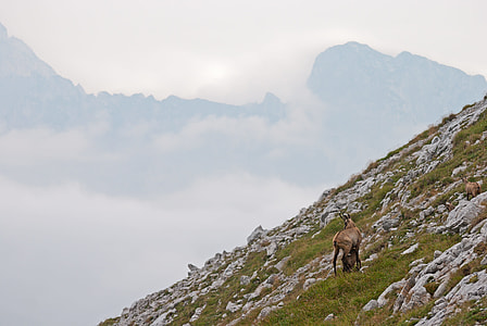 brown animal on the mountain photo during cloudy sky