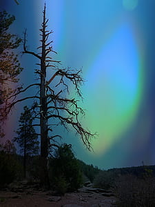 bare tree during night time with northern lights