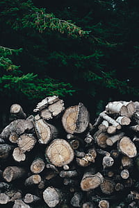 pile of wood logs near green trees