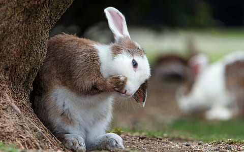 white and brown rabbit beside tree at daytime