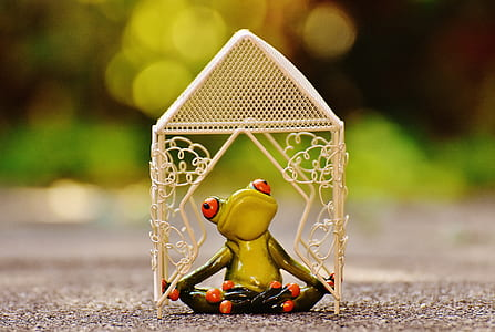 pavilion, frog, yoga, garden, summer, park