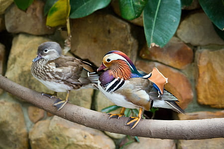 two short-beak brown and multicolored birds