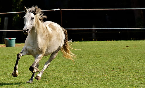 white and brown horse running on field