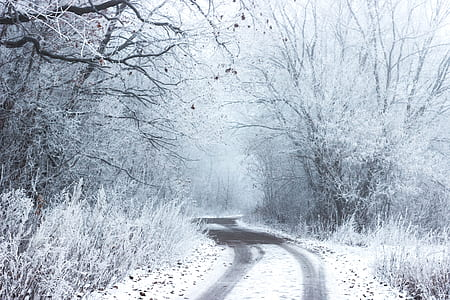 road in the middle of bare tree with snow during daytime