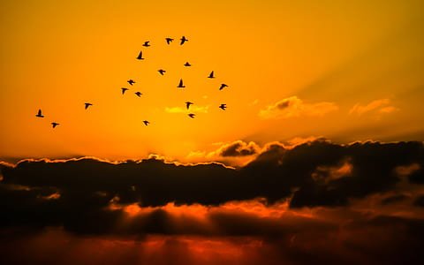 flight of bird above sky during golden hourts