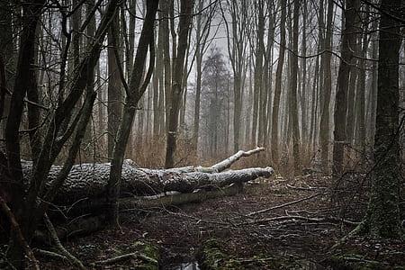 tree logs on ground