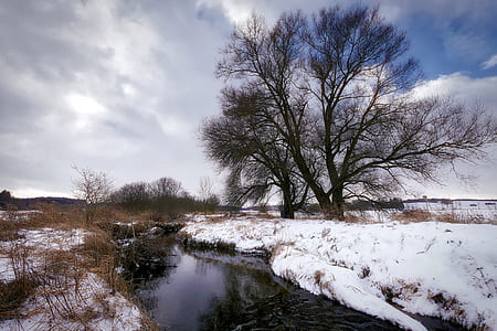 snow covered river near brown bare tree