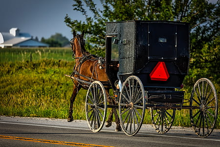 black wooden horse carriage on road during daytime