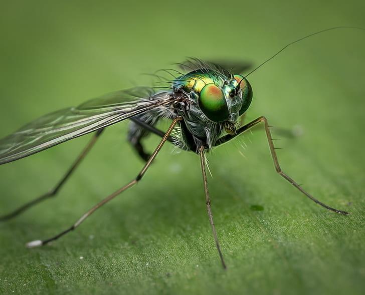 macro shot of green fly