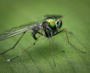 macro shot of green fly