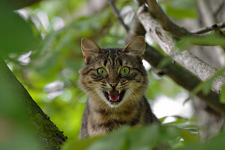 silver tabby cat on the tree brunch