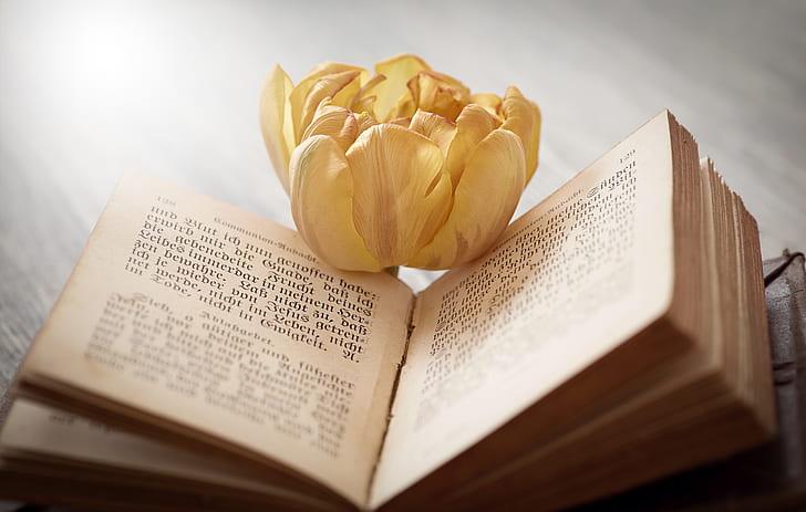 book, font, flower, tulip, blossom, bloom