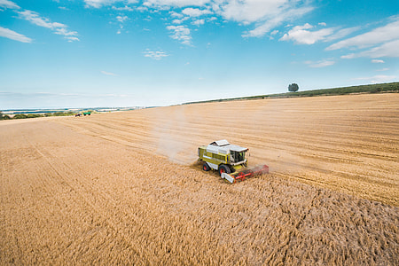 Combine Harvester Harvesting Wheat Crops
