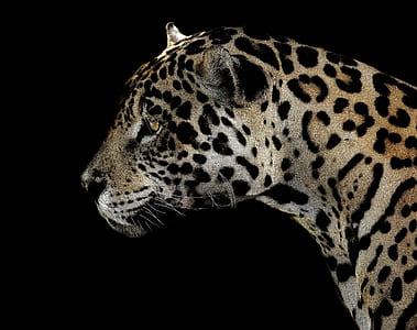 leopard in closeup photography