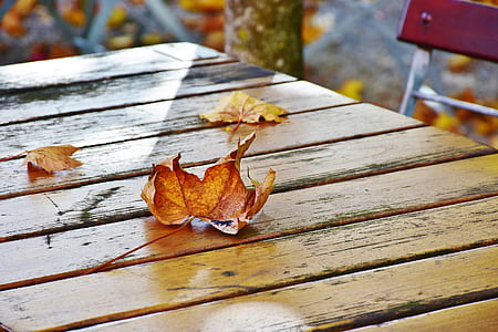 dried maple leaf on top of brown wooden table
