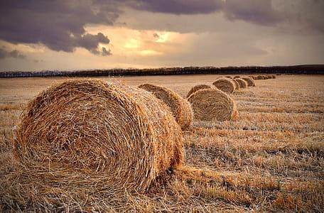 brown hay lot