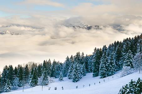 snow filled pine tree at daytime
