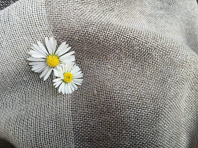 two white daisy flowers on gray textile