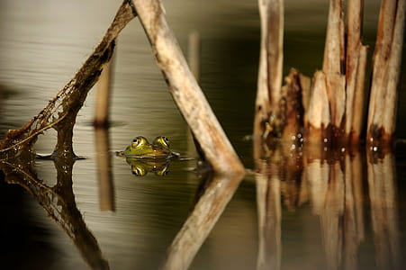 green frog on body of water near brown branches