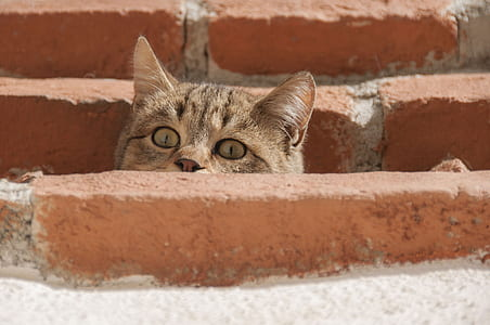 closeup photo of brown cat beside concrete brick