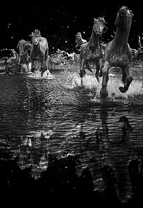 herd of horse running in body of water