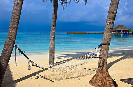 white hammock tied on two coconut trees