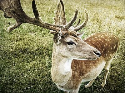close-up photo of brown reindeer