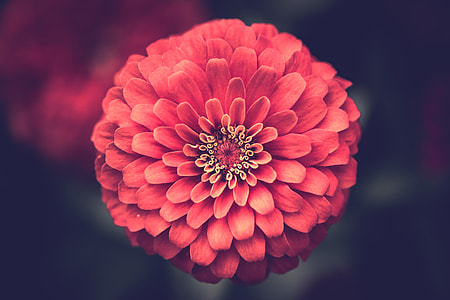 red flower photography