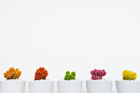 assorted plants in white ceramic pots