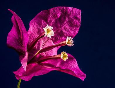 closeup photography of purple petaled flower