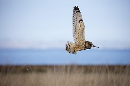 selective focus photography of flying owl