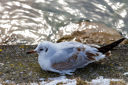 white and brown bird resting beside the waters