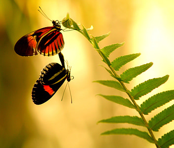 shallow focus photography of red and black butterflies on green leaves