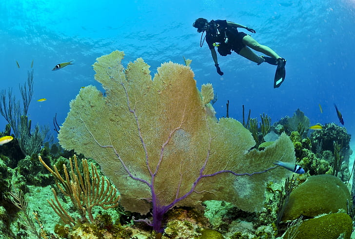 diver in black wet suit under the sea