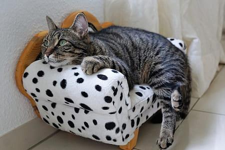 brown Tabby cat laydown near white sofa