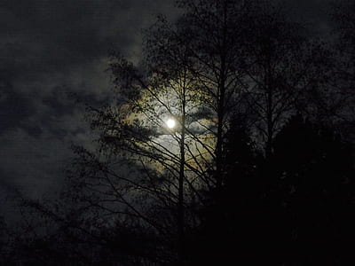 silhouette of tropical trees during full moon