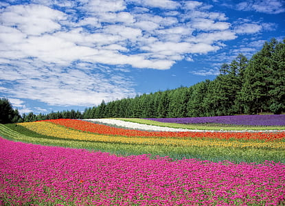 pink, green, yellow, red, white, and purple flowers with trees under blue cloudy sky