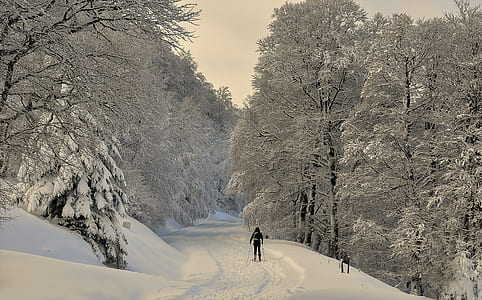 person standing in the middle of a road between snow covered trees