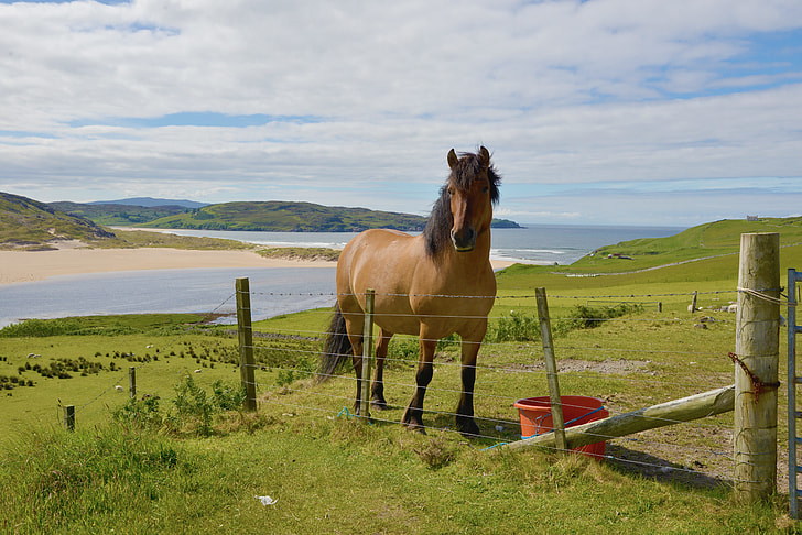 brown and black horse on stainless steel fence behind body of water